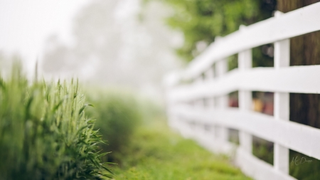 The White Fence - spring, fence, home, comfort, grass, yard, green, summer, fresh