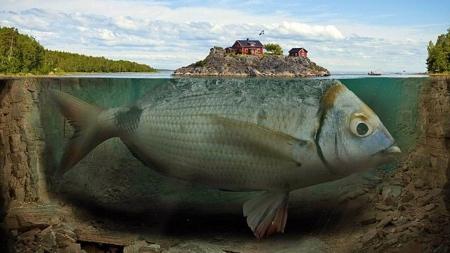 Big Fish Fantasy Fantasy Abstract Background Wallpapers On Desktop Nexus Image 2242588