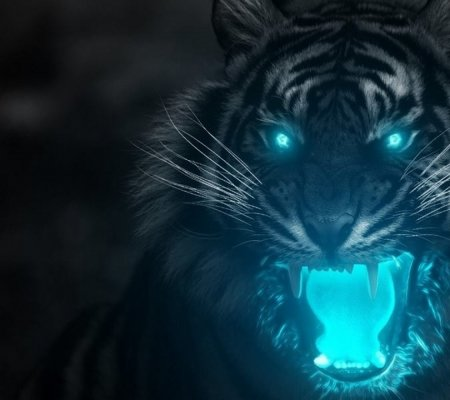 Angry Tiger Other Animals Background Wallpapers On