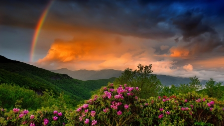Rainbow over mountain - amazing, lovely, wildflowers, sumet, colorful, rainbow, fiery, mountain, pretty, rain, landscape, sky, beautiful