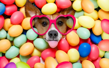 Easter Dog - Easter eggs, glasses, jack russell, hearts, tongue, Easter, eggs, funny, Spring, Jack Russell Terrier, dog
