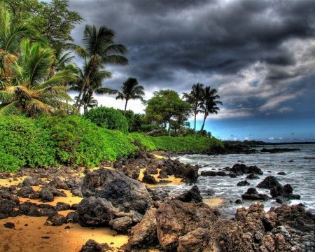 Cloudy Beach - stones, beach, storm, clouds, trees, palm, coast, nature