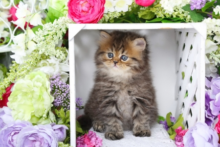 Spring persian kitty - cozy, fluffy, kitty, adorable, spring, cat, sweet, corner, cute, persian, flowers, kitten