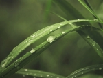 Raindrops on Fresh Grass