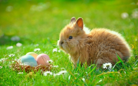 Easter Bunny - eggs, nature, bunny, easter, meadow