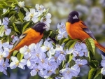 Oriole's in the Orchard