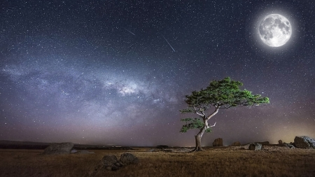 Under the Midnight Sky - stars, tree, Africa, full moon, falling stars, milky way, sky, Firefox Persona theme