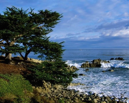 Pacific Grove Coastline, California - grove, nature, coastline, trees, sea