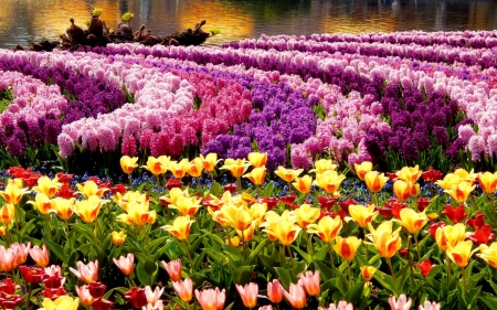 Spring Flower Park - tulips, hyacinths, colors, blossoms