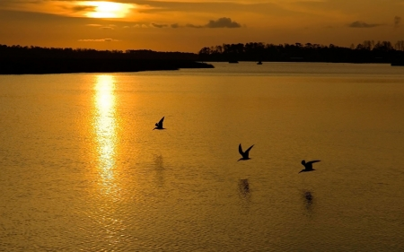 Golden Sunset - golden, sunset, birds, nature, reflection