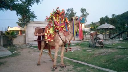 Camel at Kalar Kahar,Pakistan - Amusement Park, Photography, Kalar Kahar, Camel