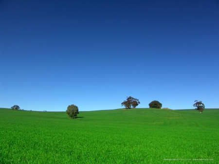 Nice weather! - Grass, Green, Trees, Blue, Sky
