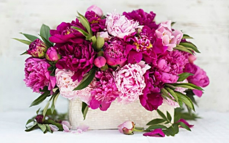 Beautiful Flowers - flowers, still life, pink, nature