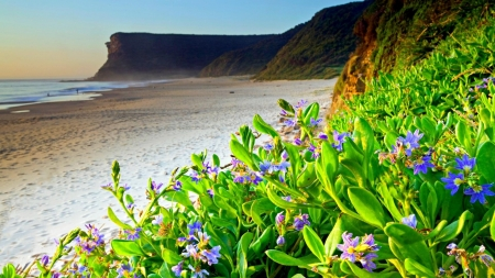 Flowery Beach - beach, flowers, nature, spring, coast