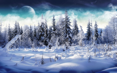 Winter Wonderland - snow, wonderland, ice, nature, sky, winter wonderland, winter, cold