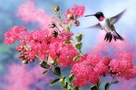 Gathering Nectar - hummingbird, pink, paintings, flowers, spring, birds, animals, love four seasons, nature