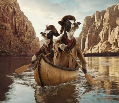 A long journey - cow, andy mahr, journey, creative, fantays, animal, hat, boat, fantasy, add, vaca, funny, commercial, river