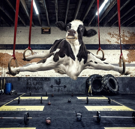 Crossfilet - cow, andy mahr, crossfilet, black, creative, animal, gym, fantasy, add, vaca, funny, commercial, white