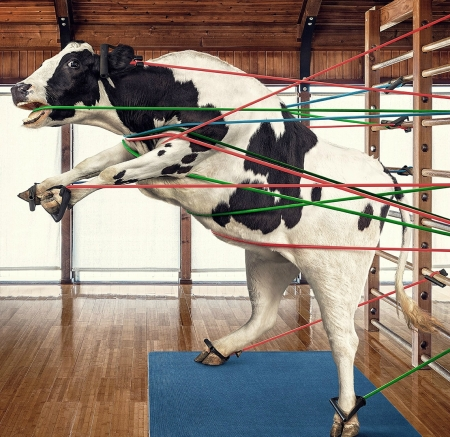 Pilates - cow, creative, pilates, animal, gym, fantasy, add, ady mahr, porterhouse, vaca, funny, commercial