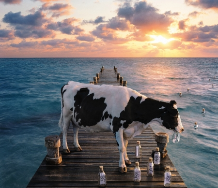 Message in bottles - cow, ponton, andy mahr, bottle, animal, sea, message, fantasy, add, water, summer, vaca, commercial