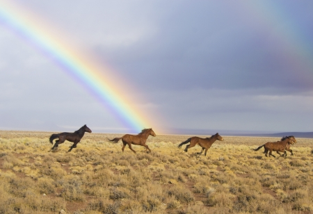 Rainbow over Wild Horses - Nature, Landscapes, Rainbows, Horses, Sky