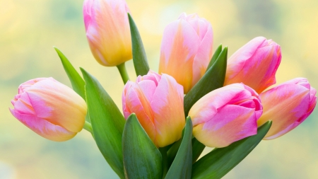 Spring Bouquet - flowers, tulips, Spring, bouquet