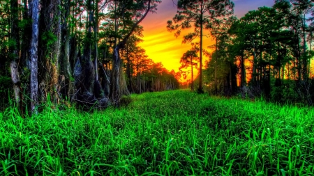 Beautiful Green Sunset hdr - grass, sky, sunset, forest, green, trees, nature