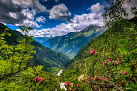 Mountain view - amazing, wildflowers, valley, greenery, spring, lvoely, mountain, pretty, view, landscape, sky, hills, beautiful, summer