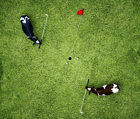 Golfing cows - golfing cows, michael murray, green, grass, vaca, funny, creative, figurine