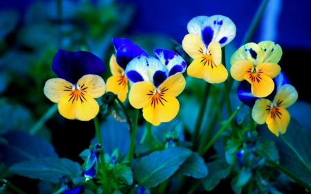 pretty flowers - yellow, flowers, nature, blue