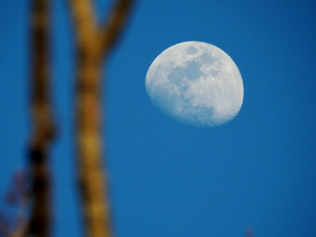 Evening Moon - Moon, Space, Skly, Photography, Sky