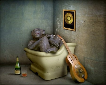 V.I.P. only - bottle, bath, creative, singer, situation, monkey, fantasy, guitar, funny