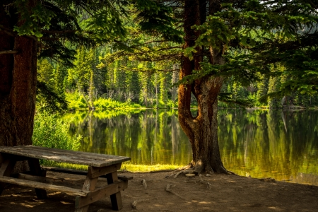 Tranquil lake - rest, view, greenery, bench, beautiful, park, trees, lake, tranquil, serenity, reflection