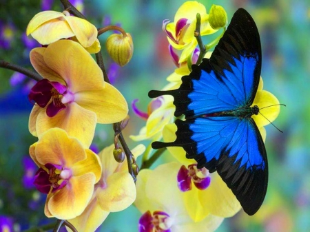 Beauty of wings - black, wings, butterfly, blue