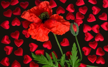 Poppy and hearts - red, poppy, mac, black, valentine, green, heart, texture, flower