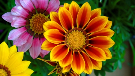 Colorful flowers flowers nature background wallpapers on desktop colorful flowers colorful pretty lovely summer flowers garden beautiful mightylinksfo