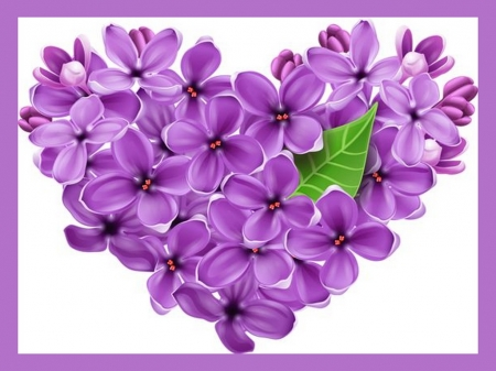 I love lilacs - flowers, purple, lilacs, heart
