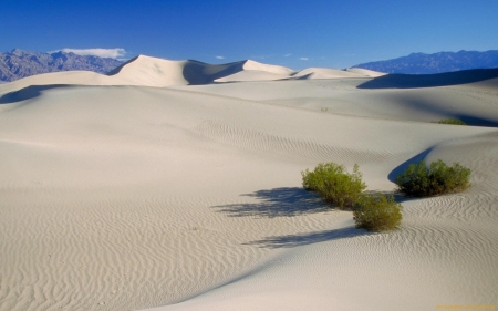 Desert - sand, nature, desert, plants
