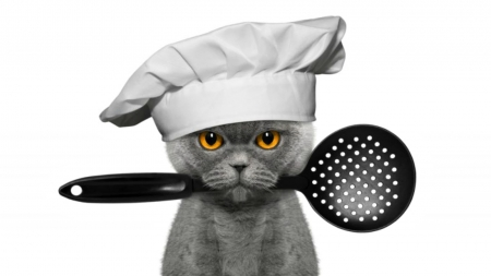 Master Cat - black, yellow eyes, cat, creative, animal, hat, master, chef, fantasy, grey, funny, white, pisica