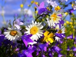 Pretty Daisies and Wildflowers