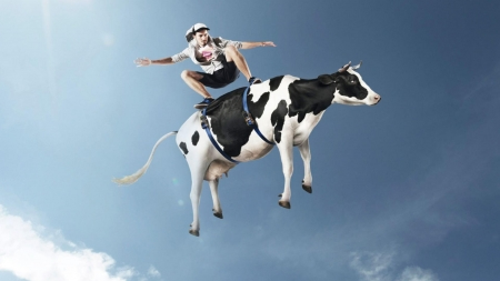 Funny surfing - cow, black, man, creative, sky, surfing, situation, animal, fantasy, vaca, funny, white, blue