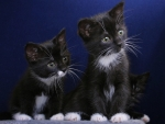 Cute Two Kittens