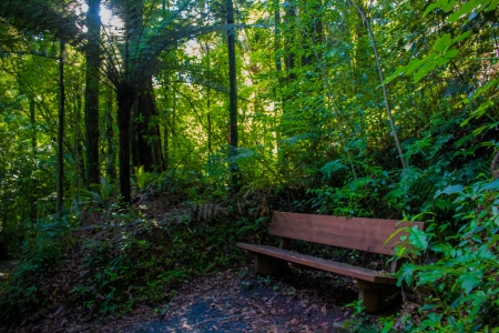 Take a seat and relax - forest, new zealand, seat, green, peaceful, scenic reserve, relaxing, waikato
