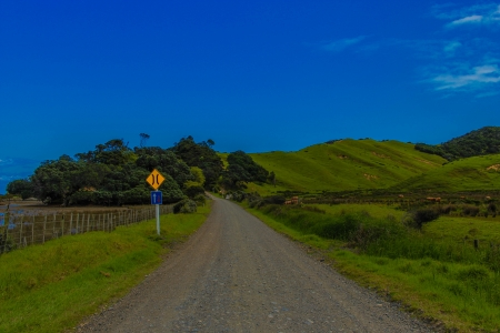 Country road - lush, farms, country, coromandel, new zealand, green, fields, road, gravel