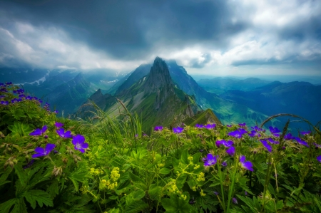 Mountain wildflowers - lovely, peak, wildflowers, clouds, mountain, pretty, view, sky, beautiful