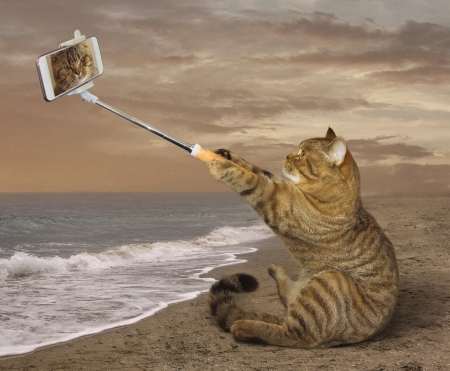 Selfie - selfie, cat, animal, sea, beach, summer, phone, funny, pisica