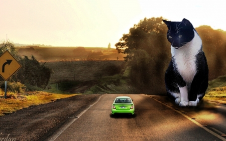 Cute Cat - cute, cat, road, animals