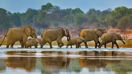 elephants - fun, animals, elephants, cool