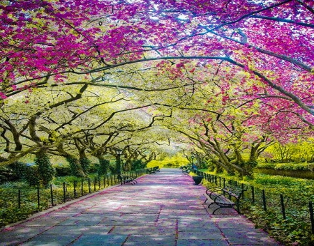 Arches in spring - flowers, walk, spring, trees