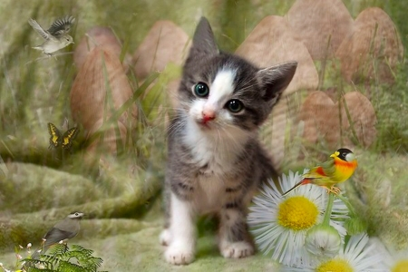Cute Kitten - Birds, sweet, kitten, flowers, Cat, cute